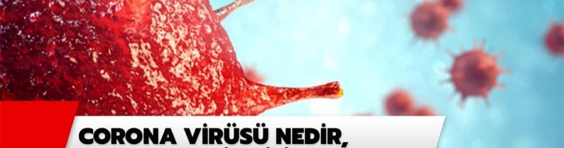 Corana Virüs Nedir ?